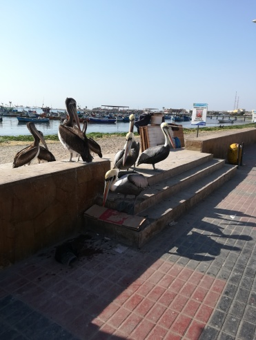 Pelicans, of course